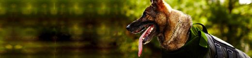 VIGILANCIA CANINA